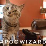 truro cat sitter, poo wizard